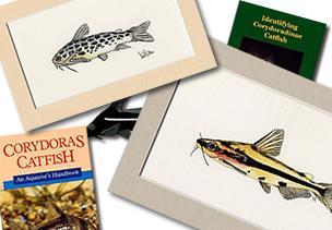 Online Corydoras Shop